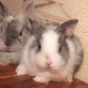 Питомник, породистые кролики